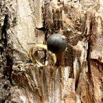 Etelli žiedas su juodu gintaru